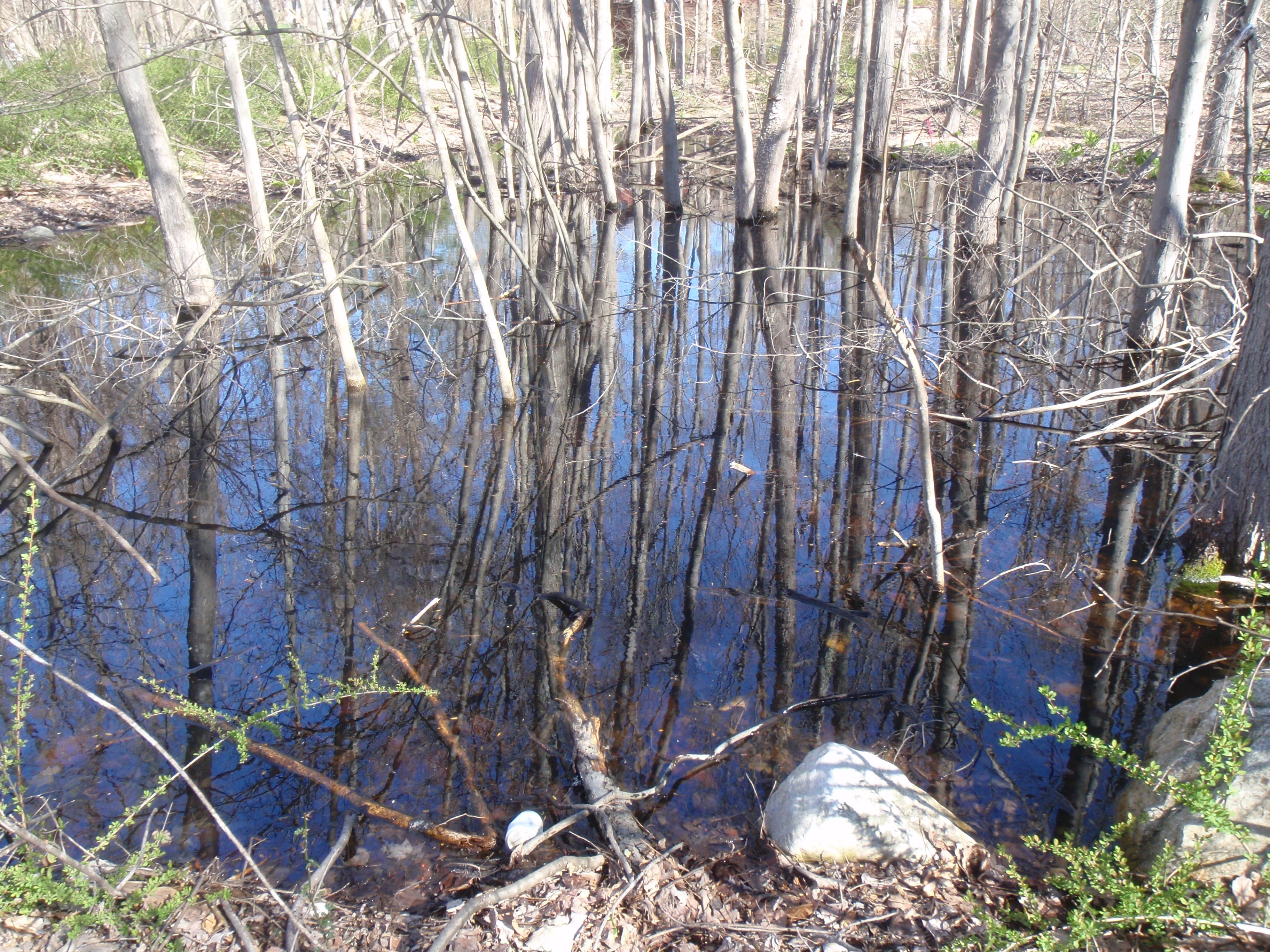 One of the wetlands on the property. 4/28/2014